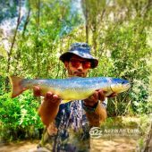 Fishing Salmo trutta fario